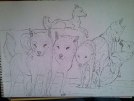 A Wolf pack by iiBiancax3