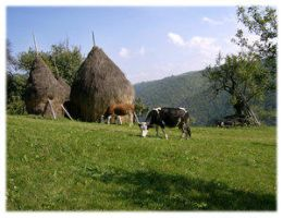 Countryside by Club-Romania