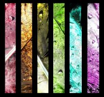 Feather Montage by katherineannecarlson