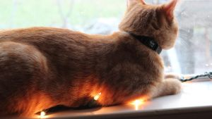 Christmas Lights and Cat Fur by Javott