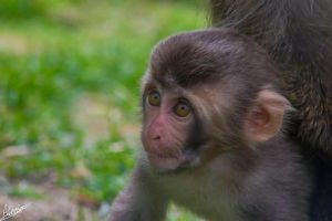 Baby Monkey by GraphicalHD