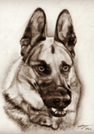 German Shepherd Commission by amaryllis-bloom
