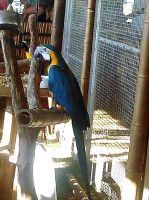 Blue And Gold Macaw by Calypso1977