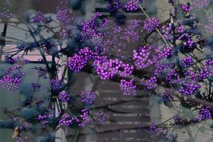berries and branches by gr4y-inu