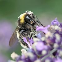 Busy Bee by not-in-my-lifetime