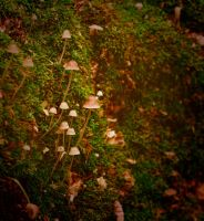 Small mushrooms by Anna-Belash