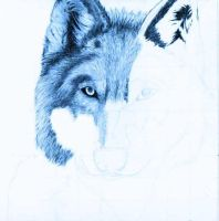 WIP:Blue Wolf by Laminated-TeabaG