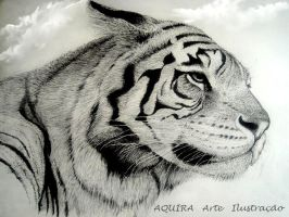 Tiger - draw by artaquilus