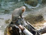 Mongoose by Tweetspie