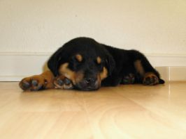 Puppy Pic 1 by Nianya