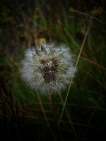 FRAGILE LIFE by ANDYBURGESS