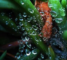 Droplets by SharPhotography