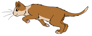 ThunderClan - Molewhisker by WildpathOfShadowClan