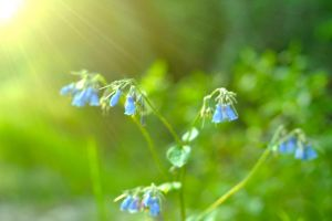 Blue Bells by NorthernOracle