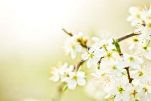 Welcome Spring by the-universal-mind