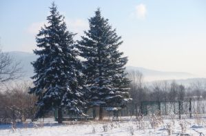 Winter trees by Woolfred