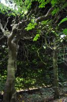 The Dryads Of Levens Hall by Forestina-Fotos