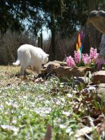 White Cat In Flowers8 by effing-stock