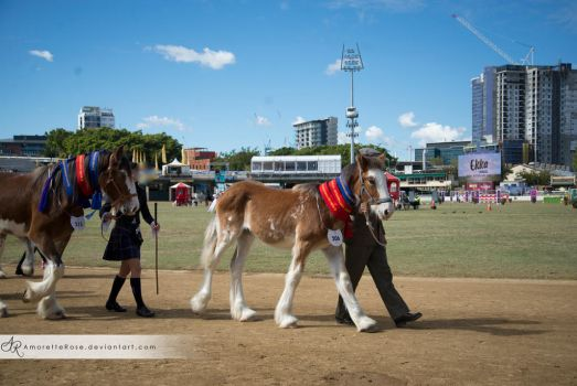 RQS Clydesdale #113 by AmoretteRose