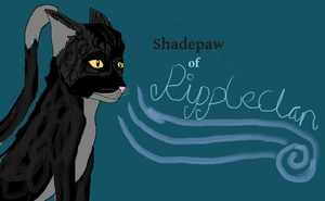 Drawing of Shadepaw by Golloperaa