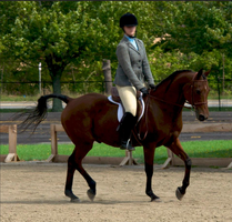Mo - All-County Dressage Warmup 9/16/12 by Zephyrra