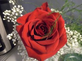 A Red Rose by MyLoveForYouEternity