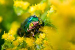 rainbow Beetle by minastir