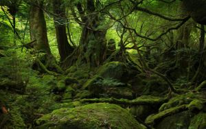 Green Forest by afhsf49