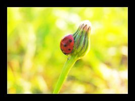 Ladybird by iDOtheDEW