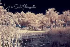 = midnight Oasis + by SaphoPhotographics