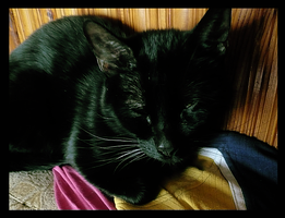 Bonny Sleeping by The-PussInBoots