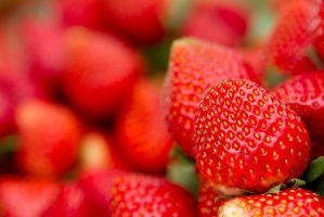 The Red Berry by jrjs
