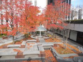 Falltime in Chicagoland by edward-is-me