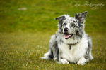Dayo by puppy1128