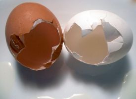 Egg Series 8 by Cynthetic