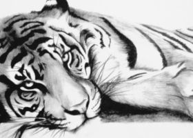 Lazy Tiger by artistelllie