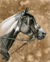 Freed Horse Study3 by mfreed