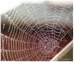 rain drops on spiders web 1 by kellymn