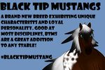 Black Tip Mustang Advertisement for Above The Bit by RowanWolves