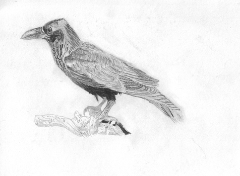 Crow by dogloverhardcore