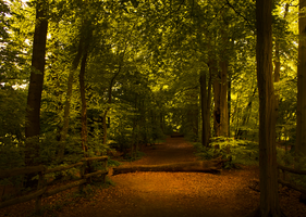 Forest walk by cs4pro