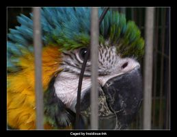 Photo: Caged by Insidious-Ink