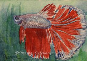 Watercolor and Ink #29 - Betta Fish by Oksana007