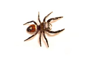 Wolf Spider Stock by Nathan-Ruby