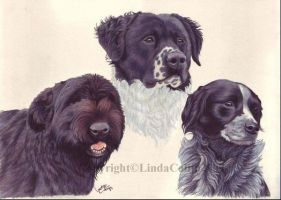 My boss' dogs by LindaColijn