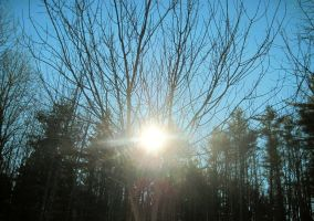 Sun Through Trees III by Steve-C2