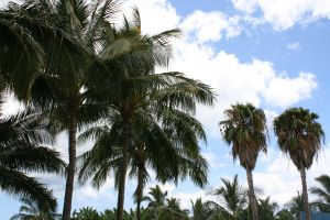 Palms in Hawaii by hunny21-stock