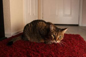 Oliver the red carpet cat by Minicorndogs