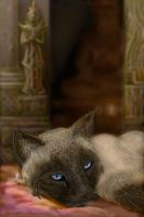 Temple Cat by Klyph