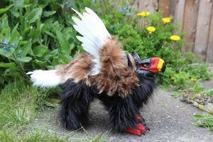 Barrek the Bateleur Griffin Artdoll 2 by Creature-Cave